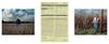 book_triptico_Monsanto26.jpg